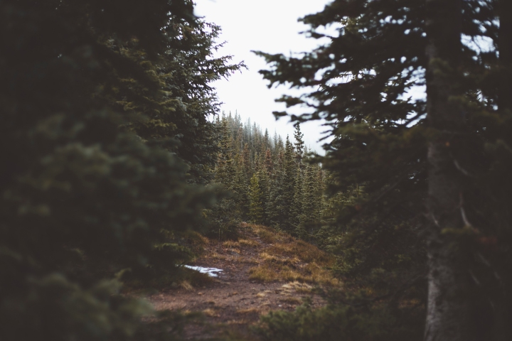 Continental Divide - Winter Park, Colorado - Travel, hiking, nature, adventure photography Shannon M West Photography Los Angeles