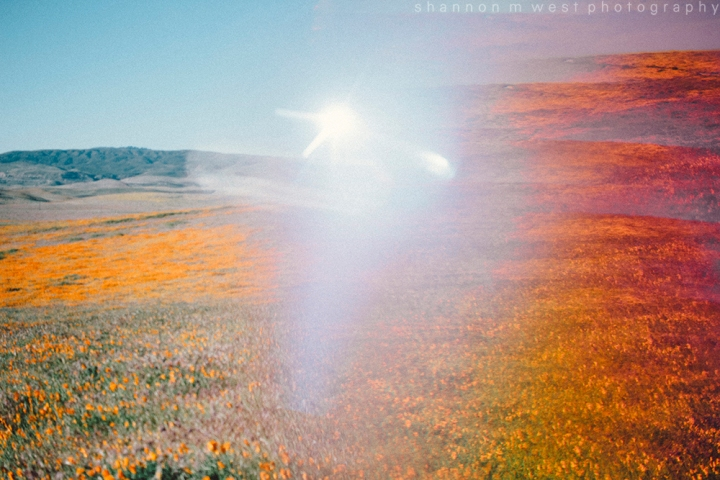 A Kaleidoscopic Bloom | Antelope Valley Poppy Fields Photography | 35mm + digital